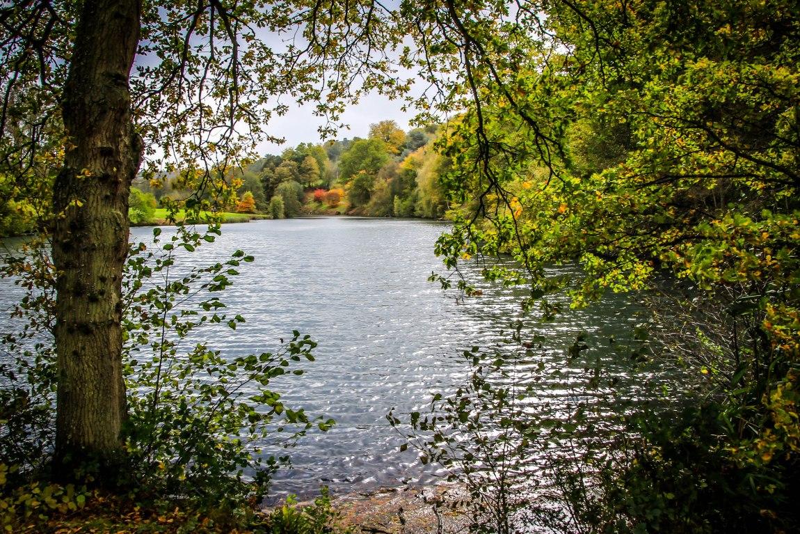 Winkworth Arboretum (1)