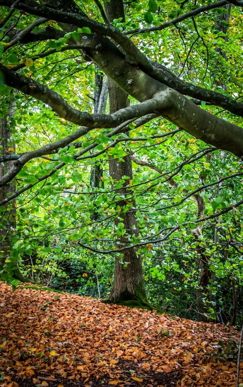 Winkworth Arboretum (11)