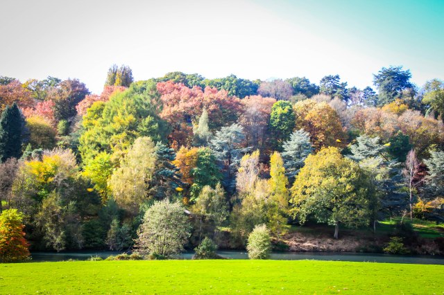 Winkworth Arboretum (13)