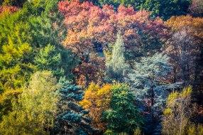 Winkworth Arboretum (14)