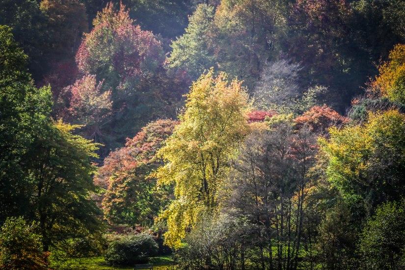 Winkworth Arboretum (15)