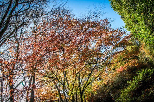 Winkworth Arboretum (17)
