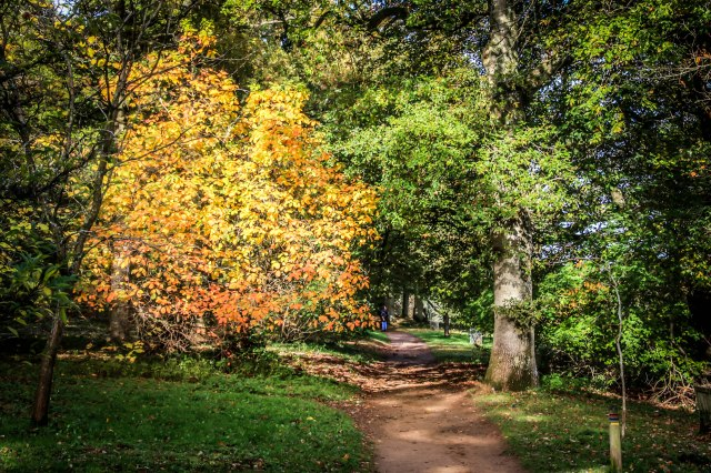 Winkworth Arboretum (19)