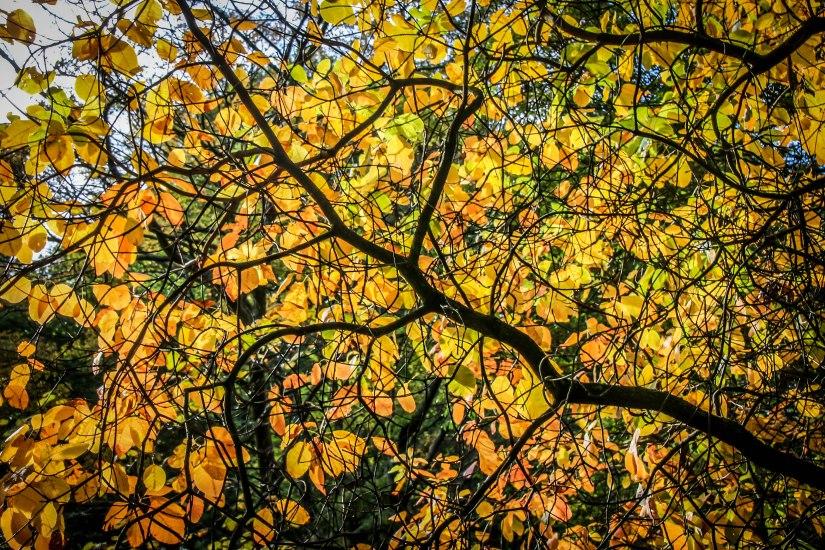 Winkworth Arboretum (20)