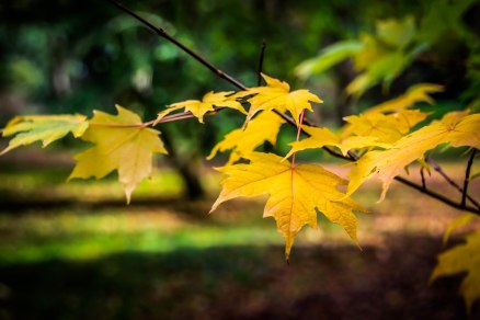 Winkworth Arboretum (23)
