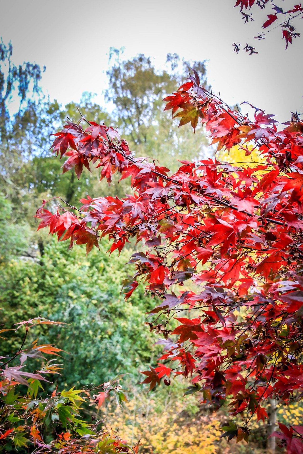 Winkworth Arboretum (5)
