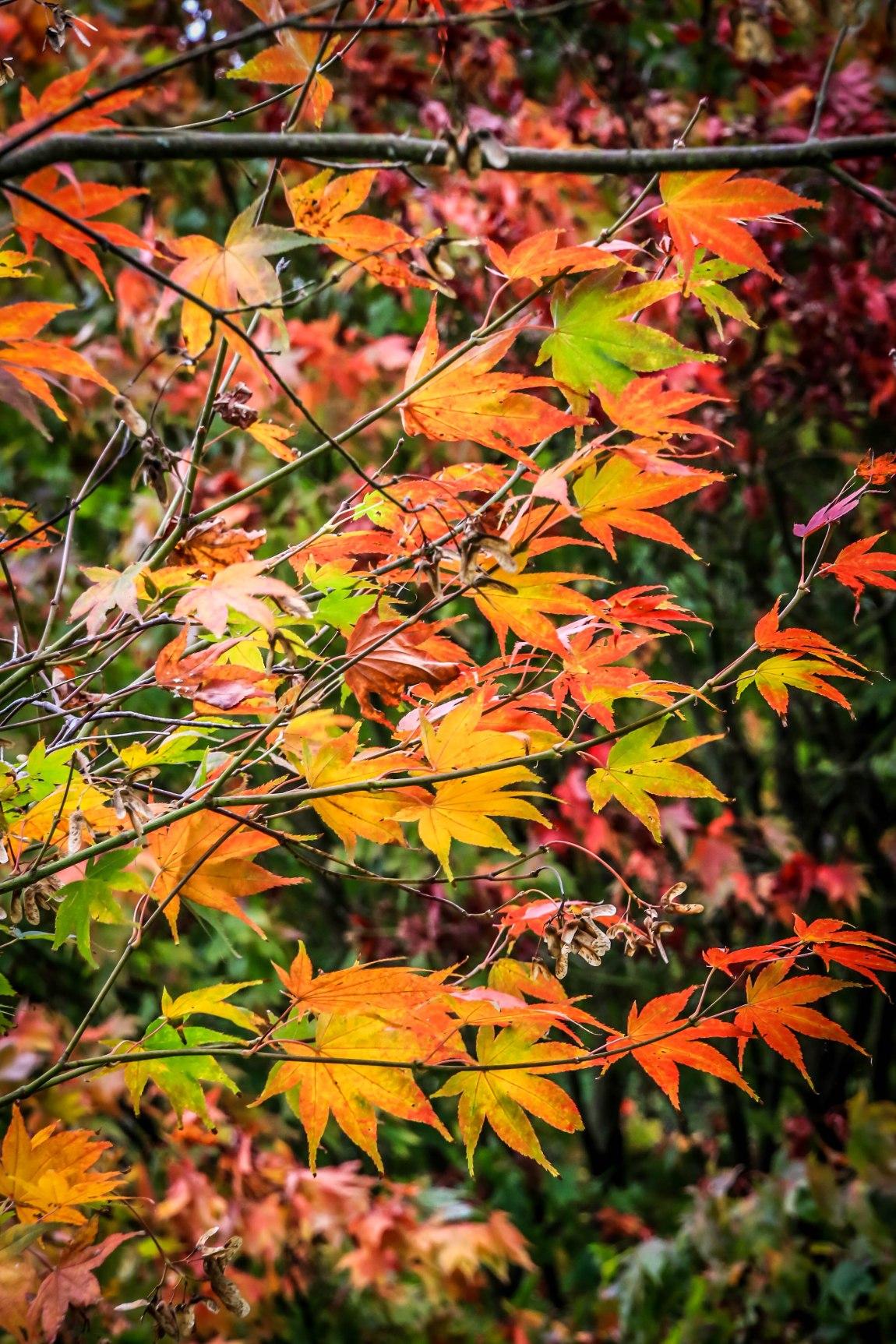 Winkworth Arboretum (6)