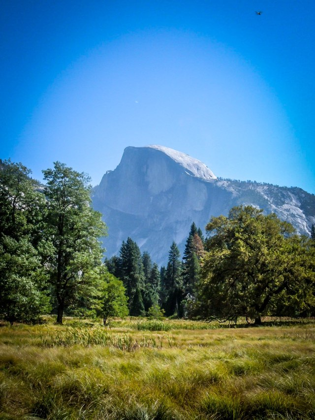 Yosemite Valley Meadows (1)