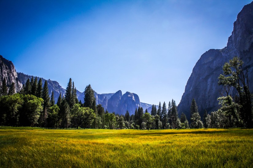 Yosemite Valley Meadows (2)