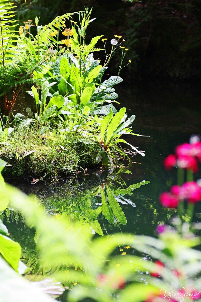 Bodnant Gardens (20)