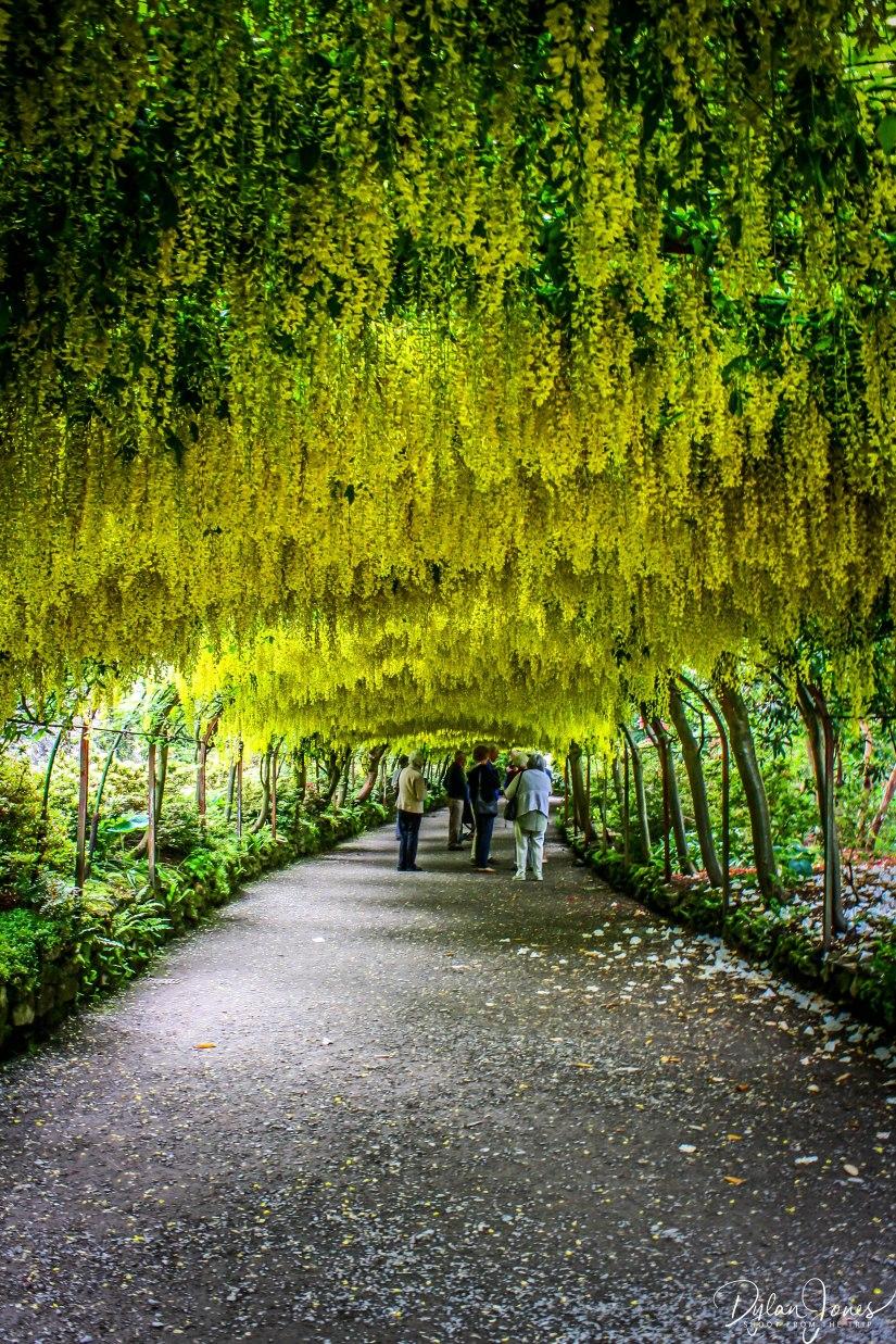 Bodnant Gardens (7)