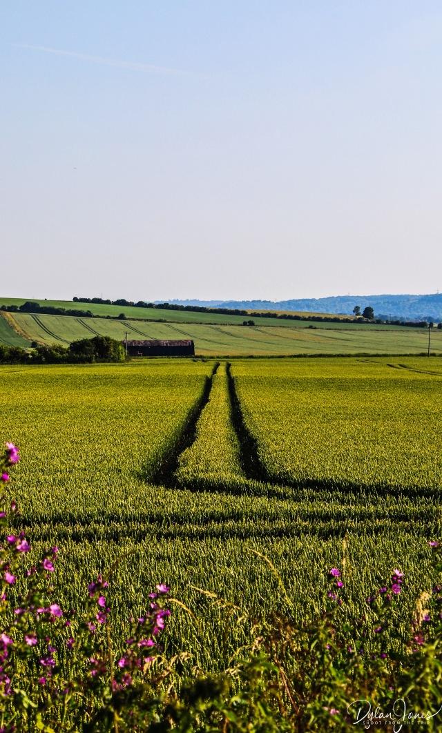 Crops (1)
