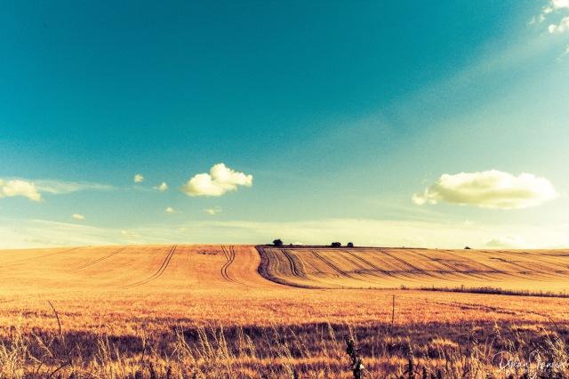 Crops (3)