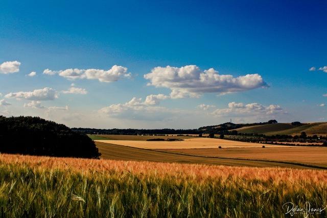 Crops (5)