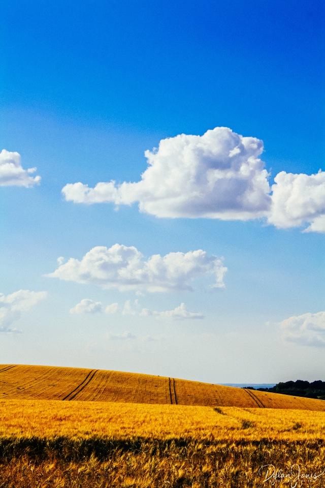 Crops (7)