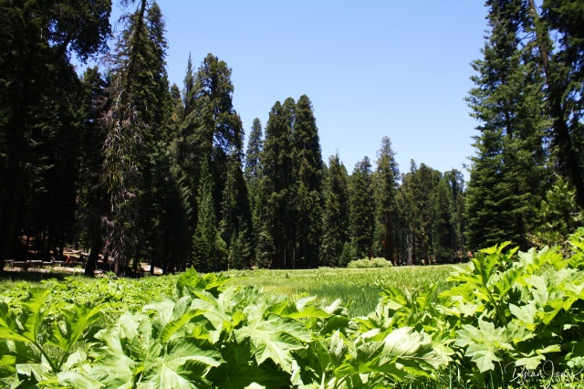 Crescent Meadow (1)