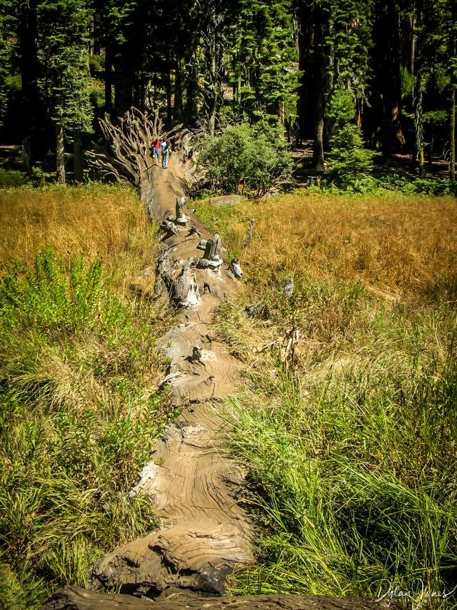 Crescnet Meadow (4)