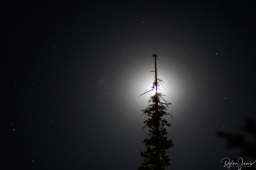 Sequoia (46)