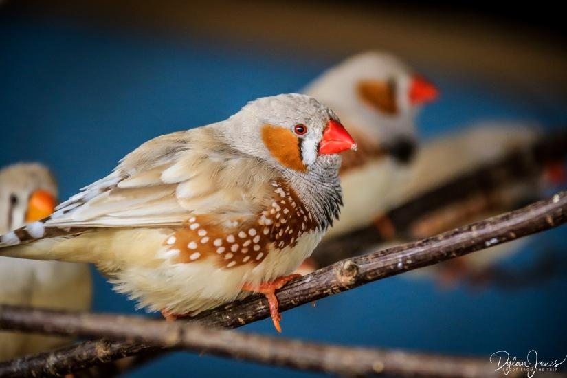 Birdworld (11)