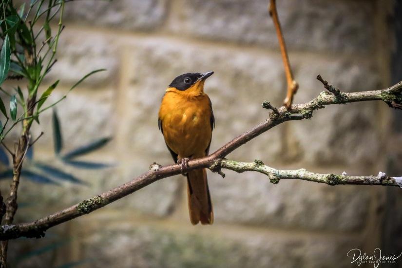Birdworld (2)