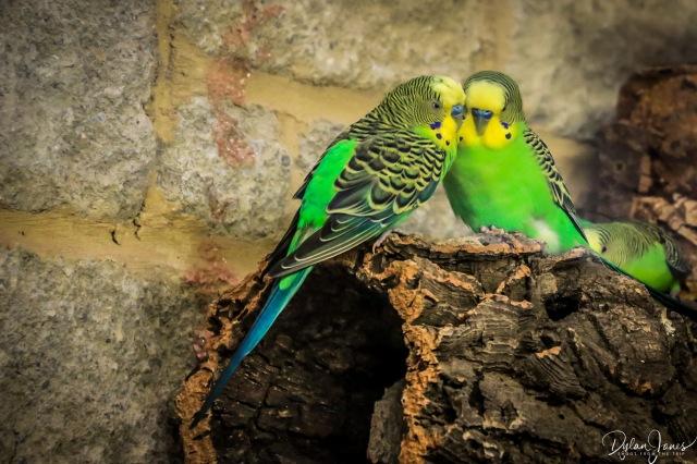 Birdworld (3)