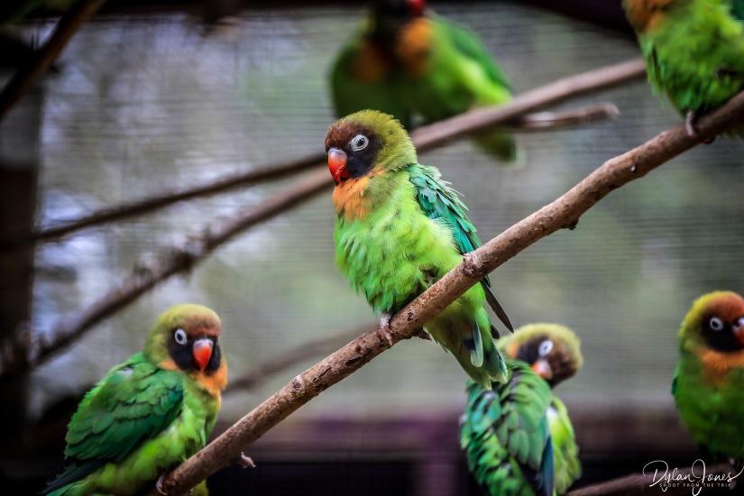 Birdworld (8)