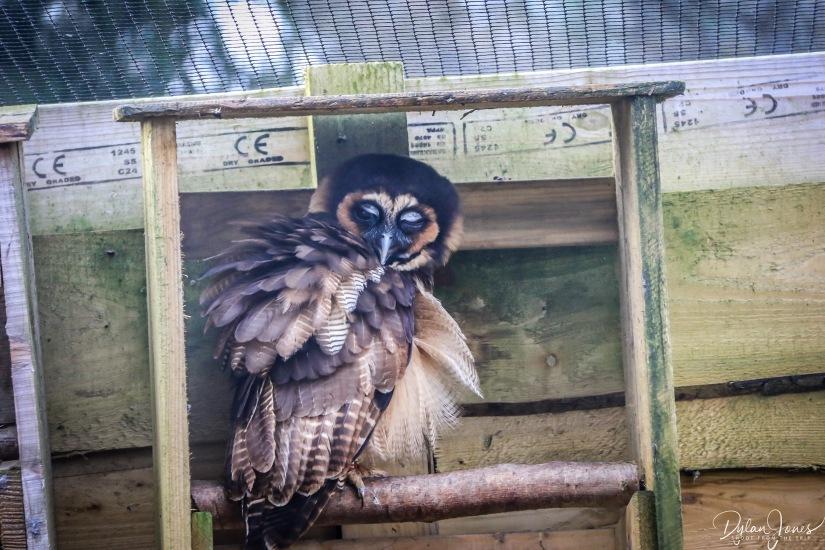 Owls (4)