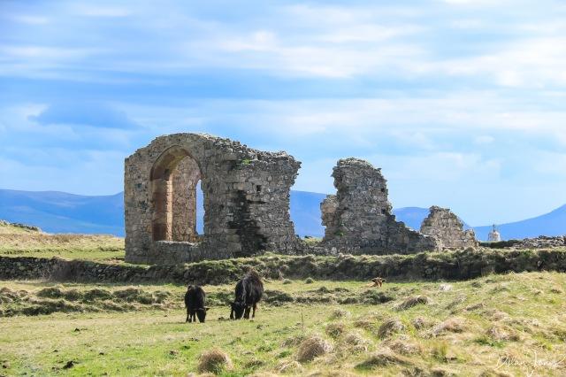 Llanddwyn Island (10)