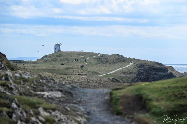 Llanddwyn Island (9)