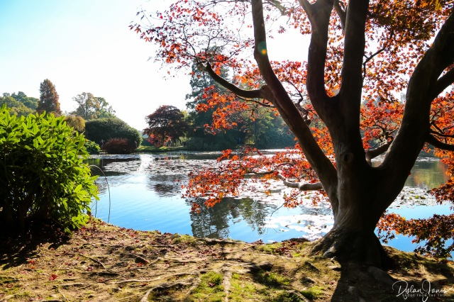 Sheffield Park and Garden Middle Lake