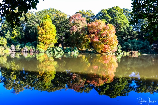 Sheffield Park and Garden reflections on Lower Woman's Way Pond